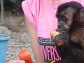 Corona feeding one of her fav monkeys