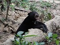 Sunbear Conservation centrum2