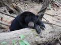 Sunbear Conservation centrum3