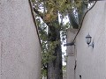 IMG 2743 (Small)