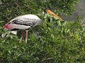 Vedanthangal bird sanctuary, prachtige watervogels