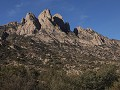 Las Cruces, Organ Mountain Desert Peaks NM, Pine T