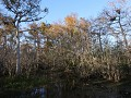 Big Cypress National Preserve, Kirby Storter Trail