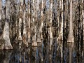 Big Cypress National Preserve, Scenic Loop Road