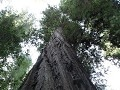 Redwoods - Avenue of the Giants