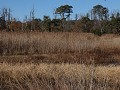 Chincoteague Island National Wildlife Refuge