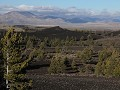 Craters of the Moon National Monument, begroeiing
