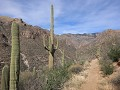 Sabino Canyon, Phoneline Trail