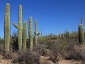Saguaro NP - Tucson Mountain District