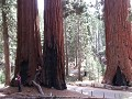 Mariposa Grove: Faithful Couple