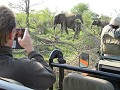 timbavati-private-nature-reserve-kruger-park-1511334053