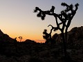 USA - 04052014 - California - Joshua Tree NP - IMG