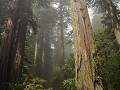 USA - 05092014 - California - Redwood NP - DSC 042