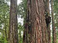 USA - 05092014 - California - Redwood NP - DSC 035
