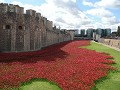 De Tower en de poppies