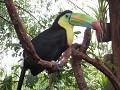 Net fake - ongelofelijk prachtige vogel : TOEKAN
