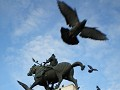 so many pigeons in Venice!